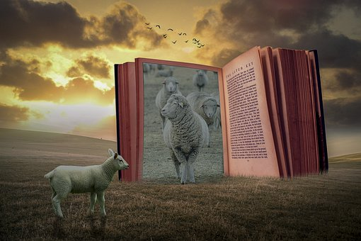 Manipulation, Sheep, Book, Landscape, Sunset, Grass