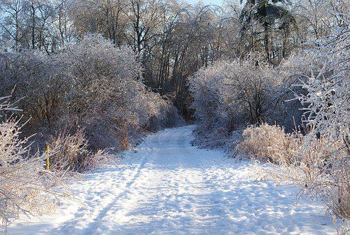 Snow, Winter, Path, Trees, Landscape, Wintry, Love