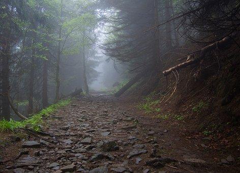 Mountains, Forest, Nature, Landscape, Tourism, Mood