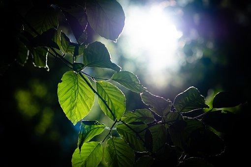 Nature, Leaf, Leaves, Green, Forest, Summer, Plant