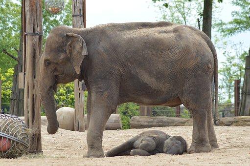 Elephant, Mom, Baby, Powerful, Mammals, Asia