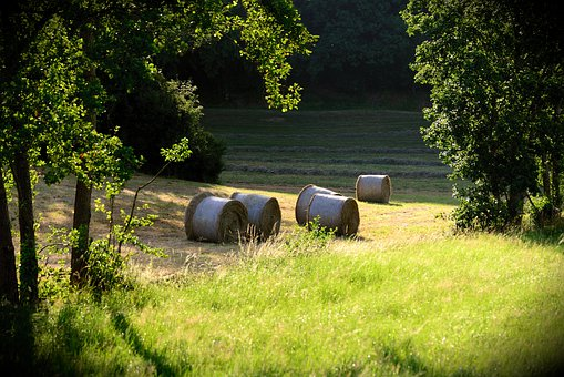 Hay Bales, Meadow, Field, Agriculture, Landscape