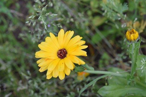 Flower, Yellow Flower Petals, Nature, Flora