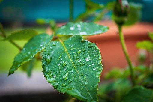 Plant, Water, Nature, Flower, Dew, Green, Wet, Spring