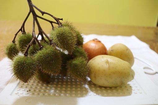 Culinary, Paprika, Plant, Annatto, The Dye, Seasoning
