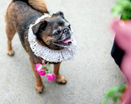 Sabaki, Man's Best Friend, Animal, The Carnival, Puppy