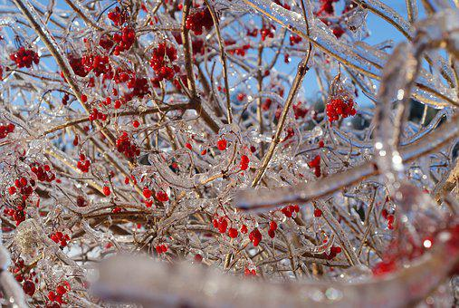 Winter, Icicles, Red, Fruit, Frozen, Cold, Wintertime