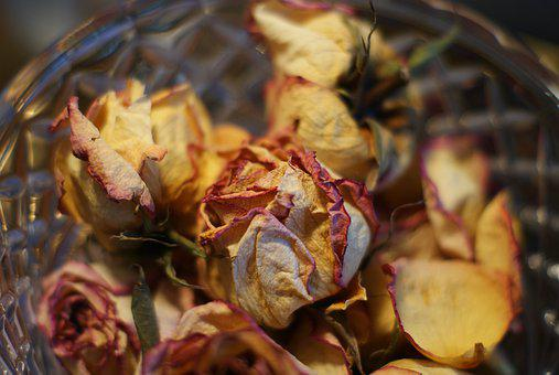 Rose, Dried, Christmas, Romantic, Blossom, Petals