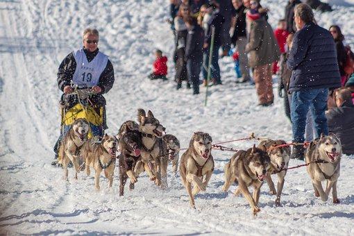 Dog, Sleds, Snow, Cold, Husky, Race