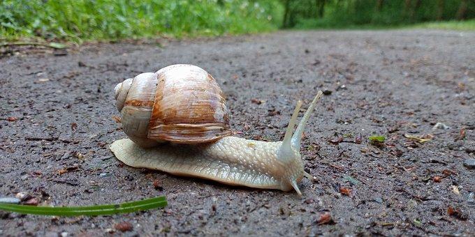 Snail, Giant Snail, Big Snail, Garden