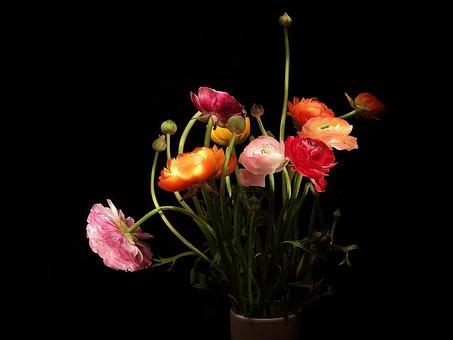 Ranunculus, Strauss, Mothersday, Bouquet, Bloom