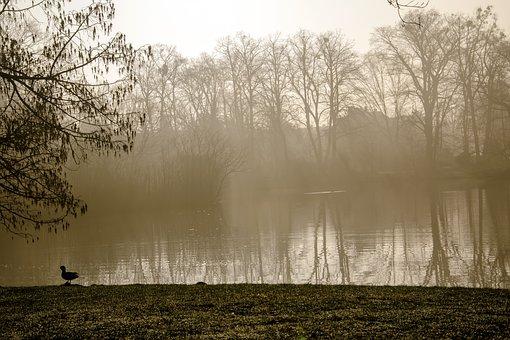 Sunrise, The Sun, Sky, Morning, The Fog, Forest, Park