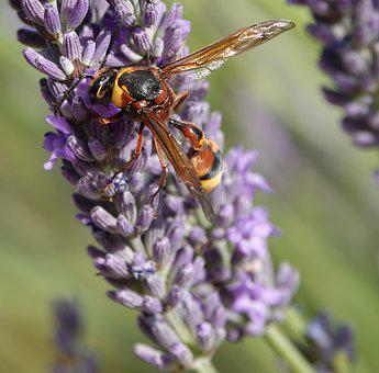Wasp, Building, Earth, Nature