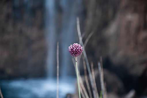 Water, Flower, Bokeh, Waterfall, Waterfalls, Spring