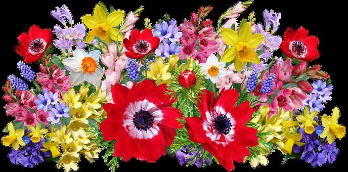 Flowers, Arrangement, Spring, Bulbs, Anemone, Garden