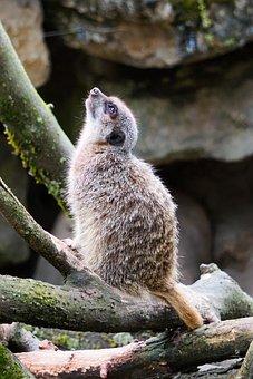 Zoo, Animal, Animal World, Enclosure, Nature, Creature