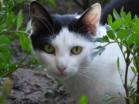 Cat, Dachowiec, Animal, Kitten, Tomcat, Animals, Kitty