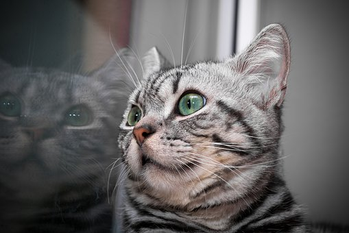 Kitten, Cat, Cat Baby, Domestic Cat, Mackerel, Charming