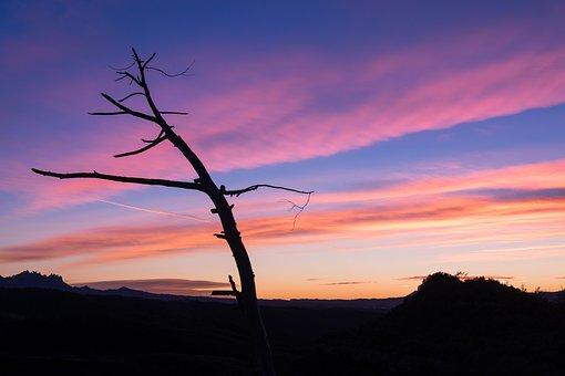 Sunset, Tree, Trunk, Clouds, Night, Shadows, Horizon
