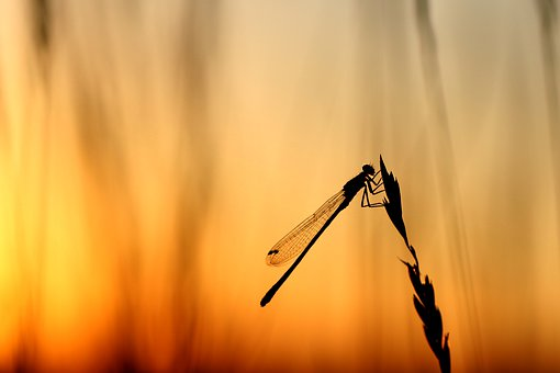 Dragonfly, Backlighting, Summer, Macro, Sunset, Wing