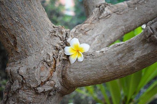 Flower, Tree, Yellow, Wood, Trunk, Spring, Bloom