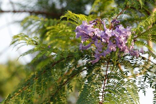 Bloom, Flower, Lilac, Fern, Green, Flowers, Leaves