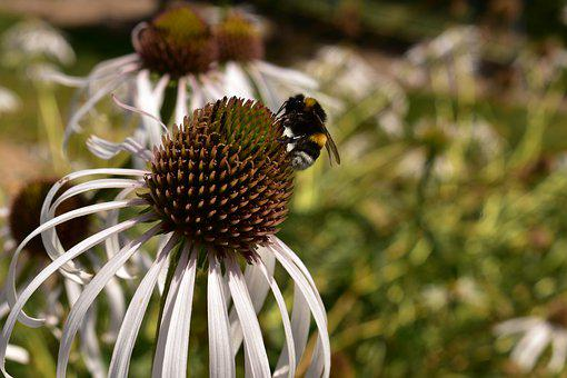 Insects, Flower, Pollen, Garden, Nectar, Macro, Nature