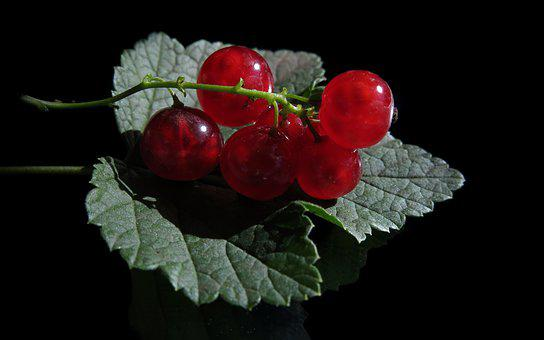 Red Currant, Ribes Rubrum, Currants, Mirroring, Leaf