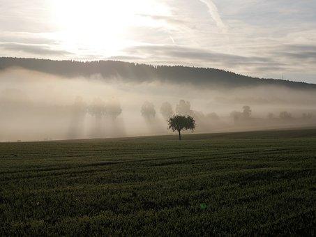 Fog, Tree, Landscape, Shadow, Forest, Autumn, Nature