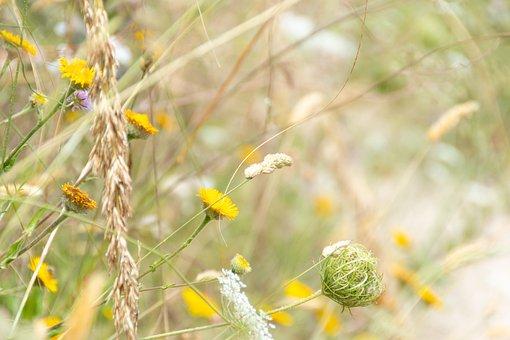 Meadow, Flowers, Grass, Sonchus Oleraceus, Nature