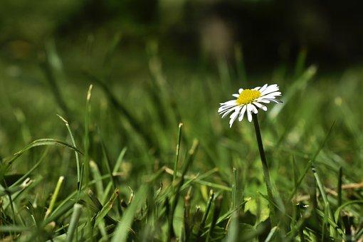 Daisy, Blossom, Bloom, Petals, Bloom, Flower