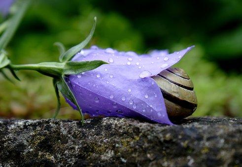 Blossom, Bloom, Snail, Hiding Place, Rain, Garden