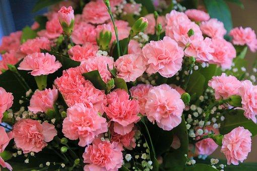 Flower, Rose, Clove, Pink, Nature, Spring, Romantic