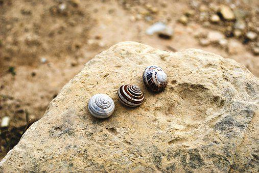 Shell, Stone, Fossil, Snail, Nature, Spiral, Stones