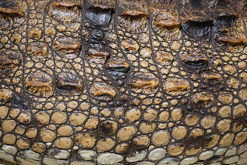 Texture, Crocodile, Scale, Stuffed, Alligator, Surface