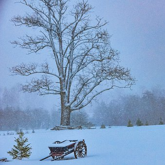 Winter, Tree, Snow, Landscape, Nature, Wintry, White