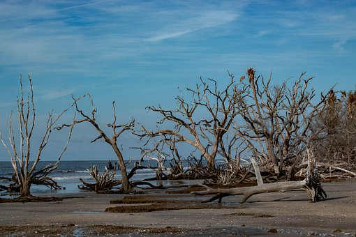 Beach, Driftwood, Sky, Nature, Coast, Sand, Sea, Wood