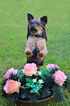 Yorkshire Terrier, Dog, Cute, Roses, Wreath