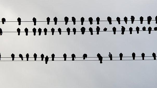 Bird, Bird On A Wire, Outdoor, Perch, Birdwatching