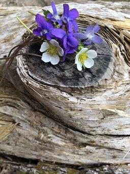 Drift Wood, White Flower, Purple Flower, Bloom, Log