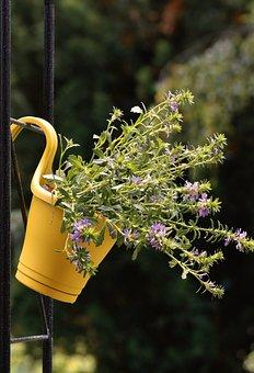 Flowers, Pot, Garden, Blue Flower Fan, Houseplants