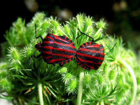 Bugs, Insects, Pair, Garden, Red