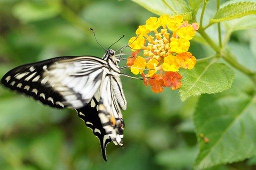 Butterfly, Flower, Summer, Nature, Beautiful, Garden