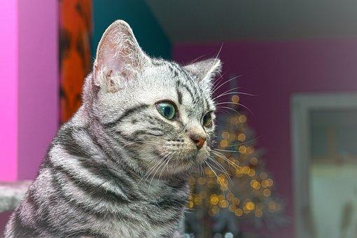 Cat, Kitten, Cat Baby, Pet, Fluffy, Fur, Dear, Cute