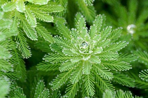 Green, Dew, Nature, Macro, Summer, Plants, Leaf, Bokeh