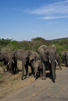 South Africa, National Park, Elephant, Wilderness