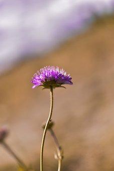 Nature, Summer, In The Summer Of, Landscape, Flower