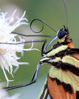 Butterfly, Macro, Brightness, Flower, Flowers, Near