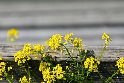 Flower, Flowers, Yellow, Plant, Garden, Nature, Summer