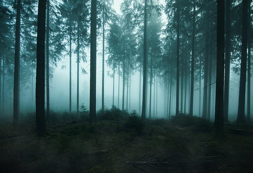 Forest, Fairy Tales, Nature, Landscape, Fog, Mysterious